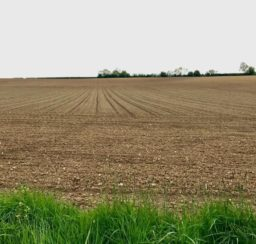 sweep of ploughed field with trees along the horizon and lush grass in the foreground along Mid Suffolk Footpath