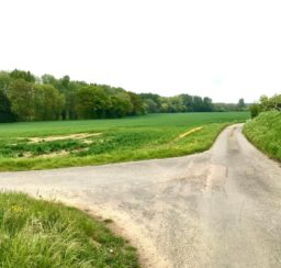 view of a lane between green fields near the Stowmarket end of the Mid Suffolk Footpath