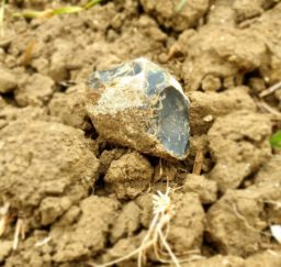 a piece of Suffolk flint ploughed up in a field