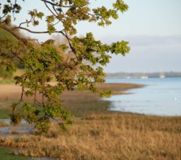 a view over Nacton Shore, with the branches of an oak tree in the foreground and the sandy shoreline and boats on the river out of focus in the background