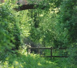 An old red brick bridge arch on the Lavenham Walk viewed through lots of green trees, with a wooden post and rail fence underneath