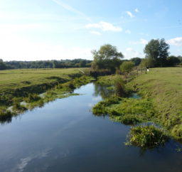 a small river running through green Sudbury Meadows, with lots of trees in the background