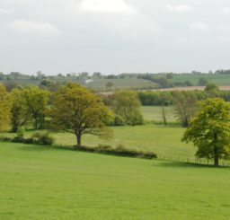 Rolling green countryside in Stoke by Nayland, with large green trees and a light cloudy sky