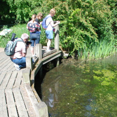 A group of people on a wooden walkway hunting for frogspawn in a shallow pond
