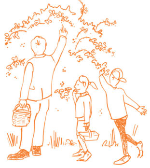 cartoon family picking wild blackberries