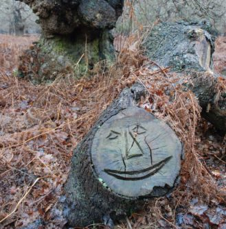 a smiley face carved onto the end of a fallen tree in amongst some bracken