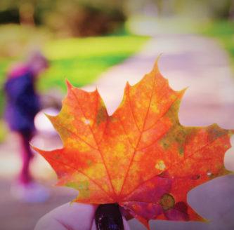 a beautiful orange autumn leaf