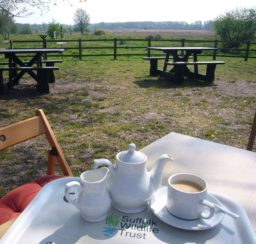 Pot of tea set out on a table with picnic benches in the background