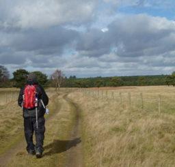 person walking along a grassy path alongside Lakenheath Warren on a cold sunny day