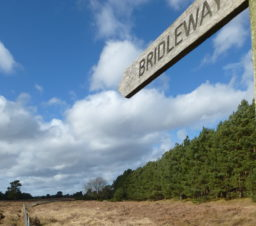 wooden bridleway fingerpost along a grassy path bordered by tall trees on a sunny day