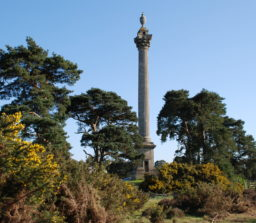 The Elveden Monument with golden flowering gorse bushes and tall trees on Weather Heath