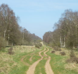 a wide grassy track through the King's Forest