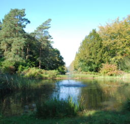 Lake surrounded by tall trees at Brandon Country Park on a sunny day in autumn
