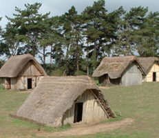 a group of thatched wooden huts in a grassy field at the Anglo Saxon Village at West Stow Country Park