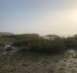Misty morning on the River Deben outside Woodbridge, with muddy foreshore and reeds