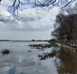 view across Martlesham Creek from under a tree with blue sky and white clouds reflected in the water