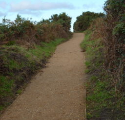 a wide footpath along the Sailors' Path, with hedging on both sides on a sunny day