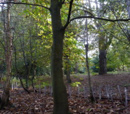 autumnal woodland, with a carpet of fallen leaves