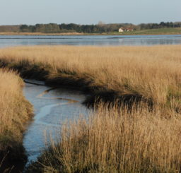 a view of mud and reeds at low tide across the River Alde