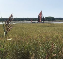 a black Thames Barge with traditional red sails viewed at Snape with green reeds in the foreground, on a sunny day
