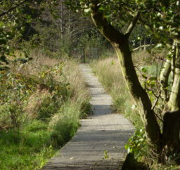 a wooden boardwalk path through some wetland with trees and tall grasses on each side, along the Sailors' Path