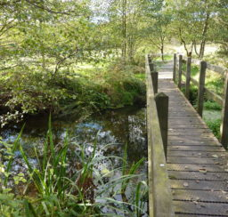 a wooden footbridge in amongst trees over a small river along the Sailors' Path