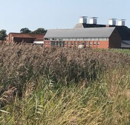 Snape Maltings - a large red brick building with traditional chimneys, viewed across reeds on Snape Marshes