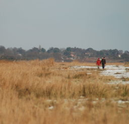 Walberswick marshes in a snowy winter, with a tree belt and the square tower of a church visible in the background