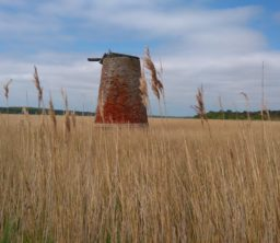 A former red brick wind pump standing proud amongst the straw-coloured reeds on a sunny day at Westwood Marshes