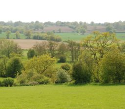 View over rolling green countryside, with a variety of types of tree at Stoke by Nayland