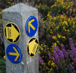 Suffolk Coast Path and public footpath waymarkers on wooden post in amongst gorse and heather